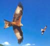 kites2mini